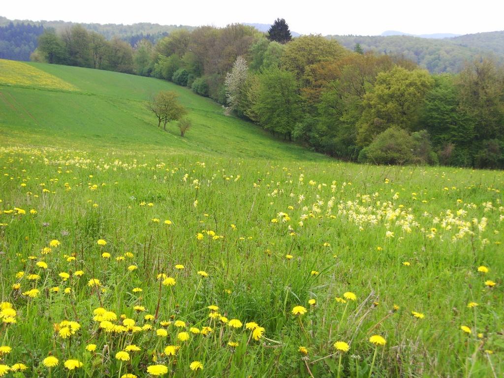 Der 'Waldkalender - aus Wald und Flur' ... Monatsblatt Mai - mit Doris Schellhas